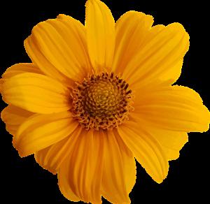 kwiatowe ekstrakty mają działanie przeciwtrądzikowe